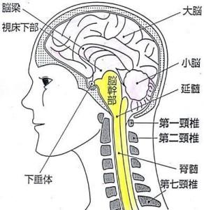 ニューロンアート