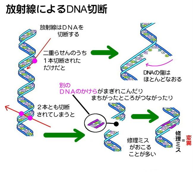 DNA破損